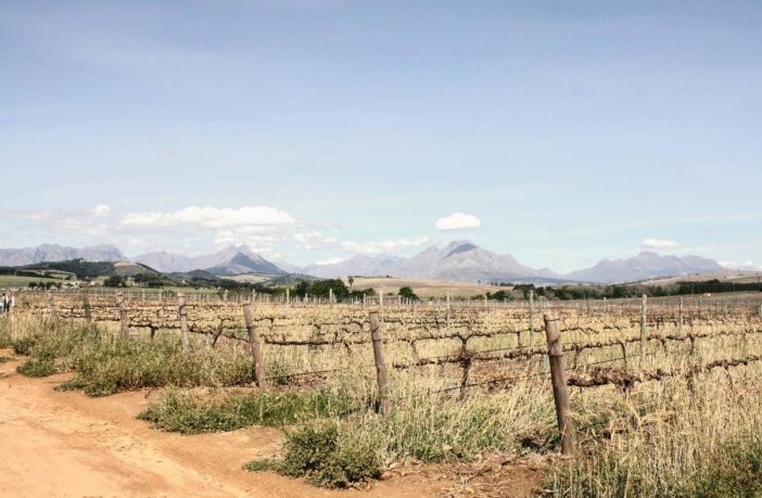 Agricultural sector fertile with problems
